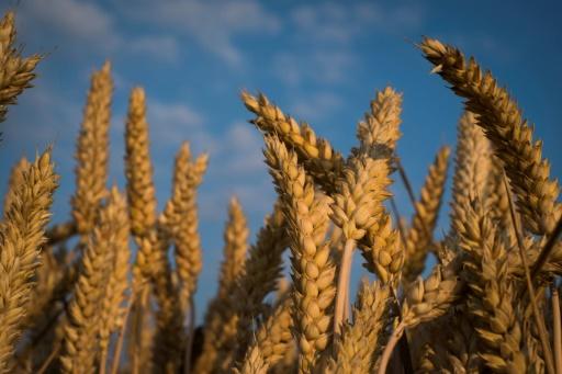 L'Anses proscrit un fongicide agricole dangereux pour l'être humain — Santé